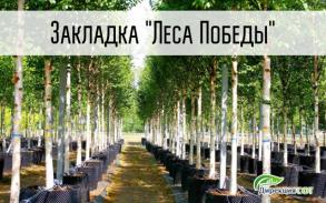 Посадка первых деревьев